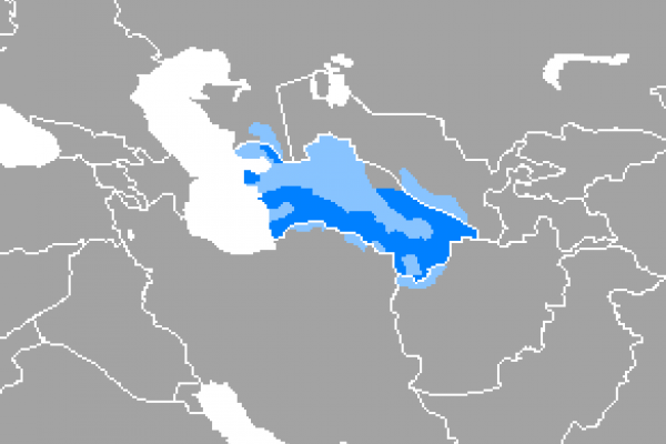 Learn about the Turkmen Language